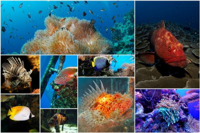 Divers poissons marins