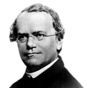 Portrait du biologiste Gregor Mendel (1822-1884)
