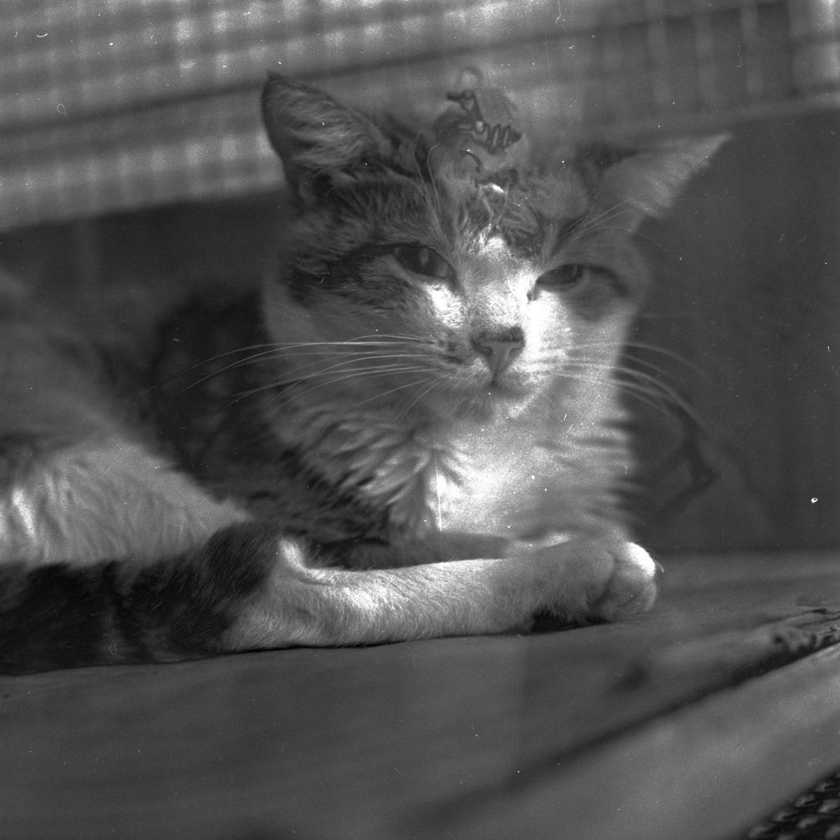 jacquette A quoi rêvent les chatons ?