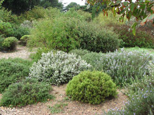 jacquette Requiem pour un jardin anglais