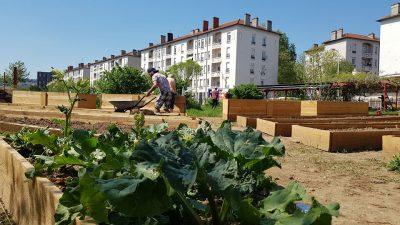 Le Jardin Oasis de Gerland animé par l'association La Légumerie